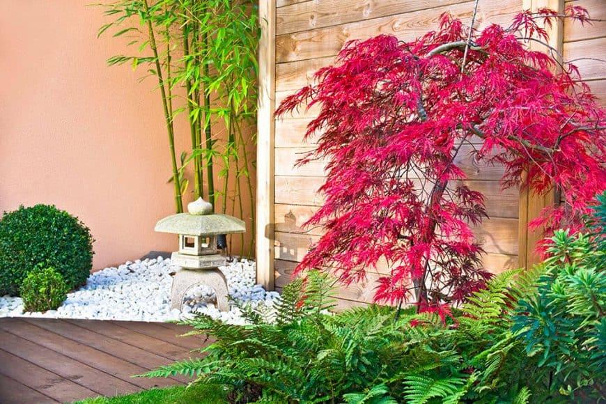 Un jardin japonais en 5 étapes