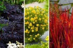 Un jardin noir, jaune, rouge !