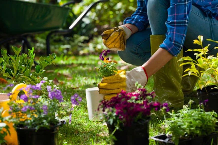 10 plantes pour réussir son talus