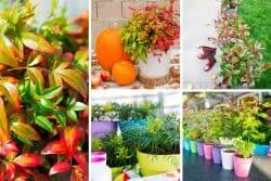 5 arbustes pour une terrasse d'automne