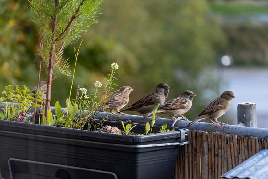 Des plumes au balcon