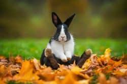 Pas un rongeur, le lapin ?