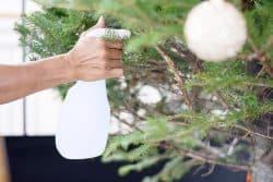 4 astuces pour garder votre sapin de Noël plus longtemps