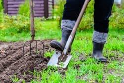 Plantez maintenant l'ombrage de l'été prochain