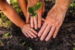 Les 10 bonnes résolutions du jardinier