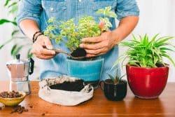 Le marc de café, un engrais gratuit, naturel et maison