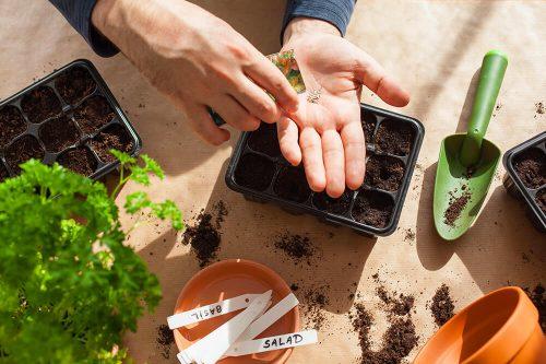 Serre : que peut-on semer ?