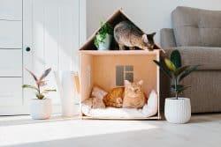 Aménager « chat » maison