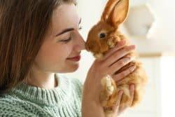 Quels besoins pour mon lapin?
