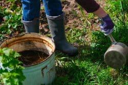 Soignez vos plantes par des plantes!