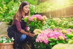 Votre hortensia d'intérieur au jardin!