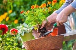 Pour des plantes en pot en pleine forme