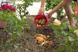 Le compostage en surface, un cycle raccourci