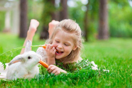 Vaut-il mieux un lapin à la casserole ou un lapin au refuge?